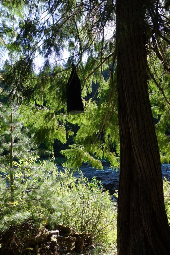 Endlich hängt der Bärensack weit weg im Baum